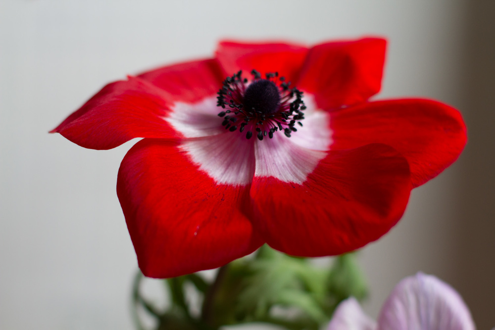 anemones from mandy-2.jpg