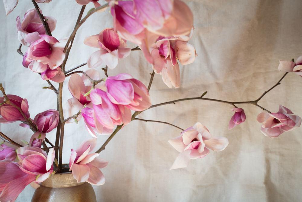 japanese magnolia-1370.jpg