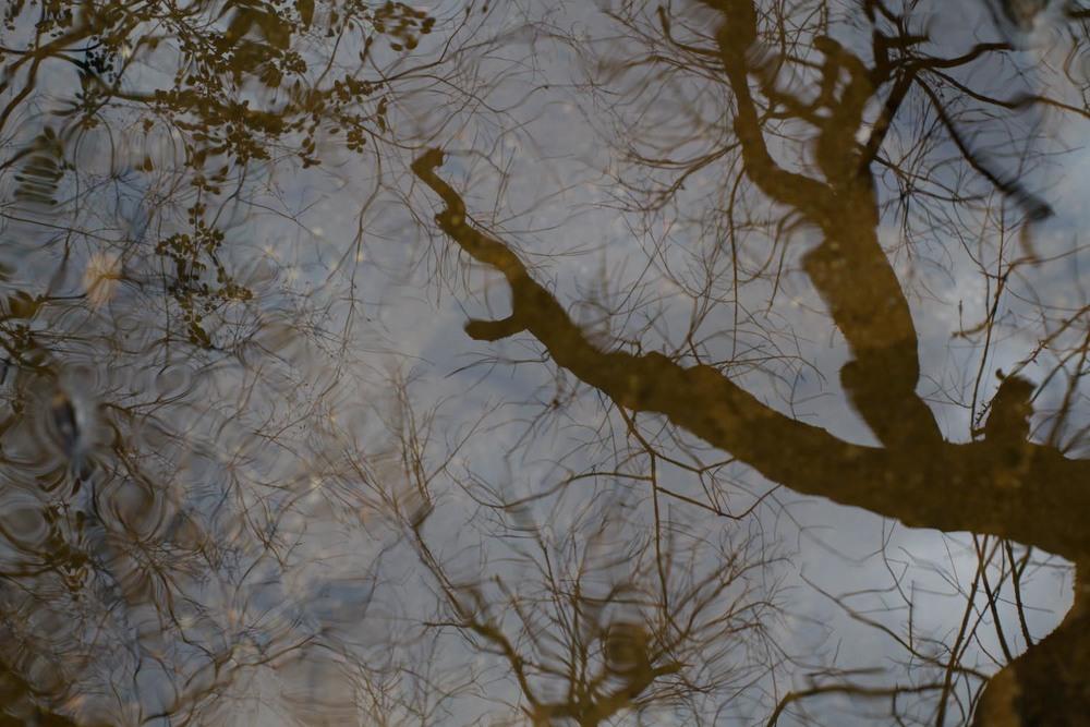 creek-5915.jpg