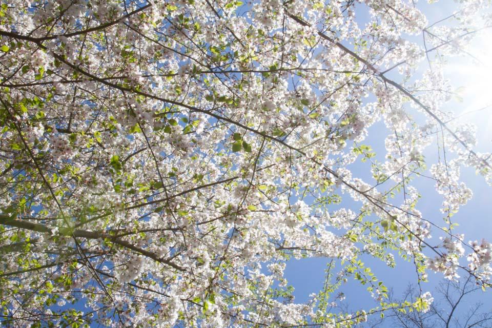 KB_whiteblooms-6590.jpg