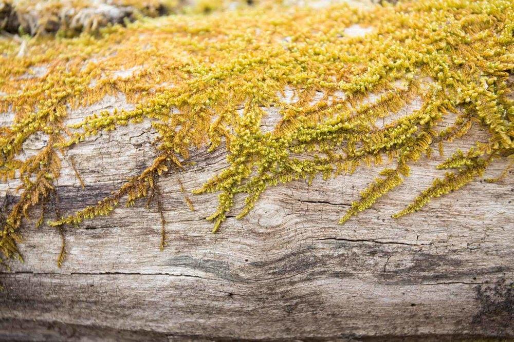 moss and limb-2486.jpg