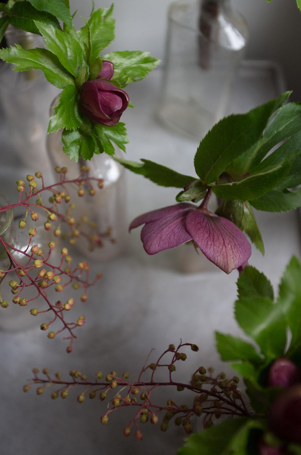 early blooms_hellebores-9690.jpg