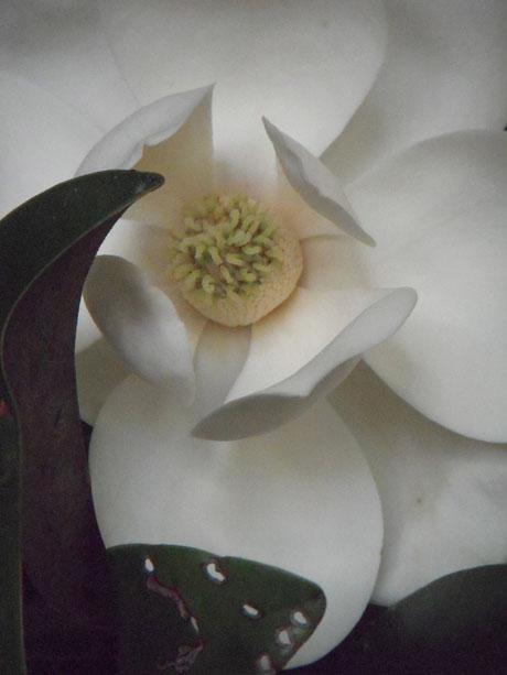RW-aging_magnolias-7855.jpg