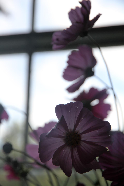KB_pinkblooms-window-5711.jpg