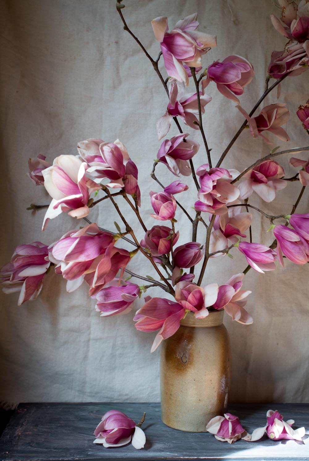 japanese magnolia-1364.jpg