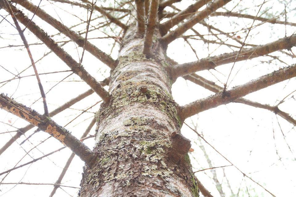 KB_lovelytree-6198.jpg