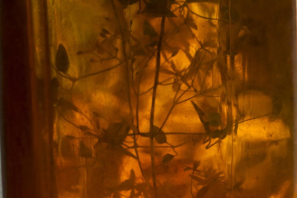 autumn clematis-4959.jpg