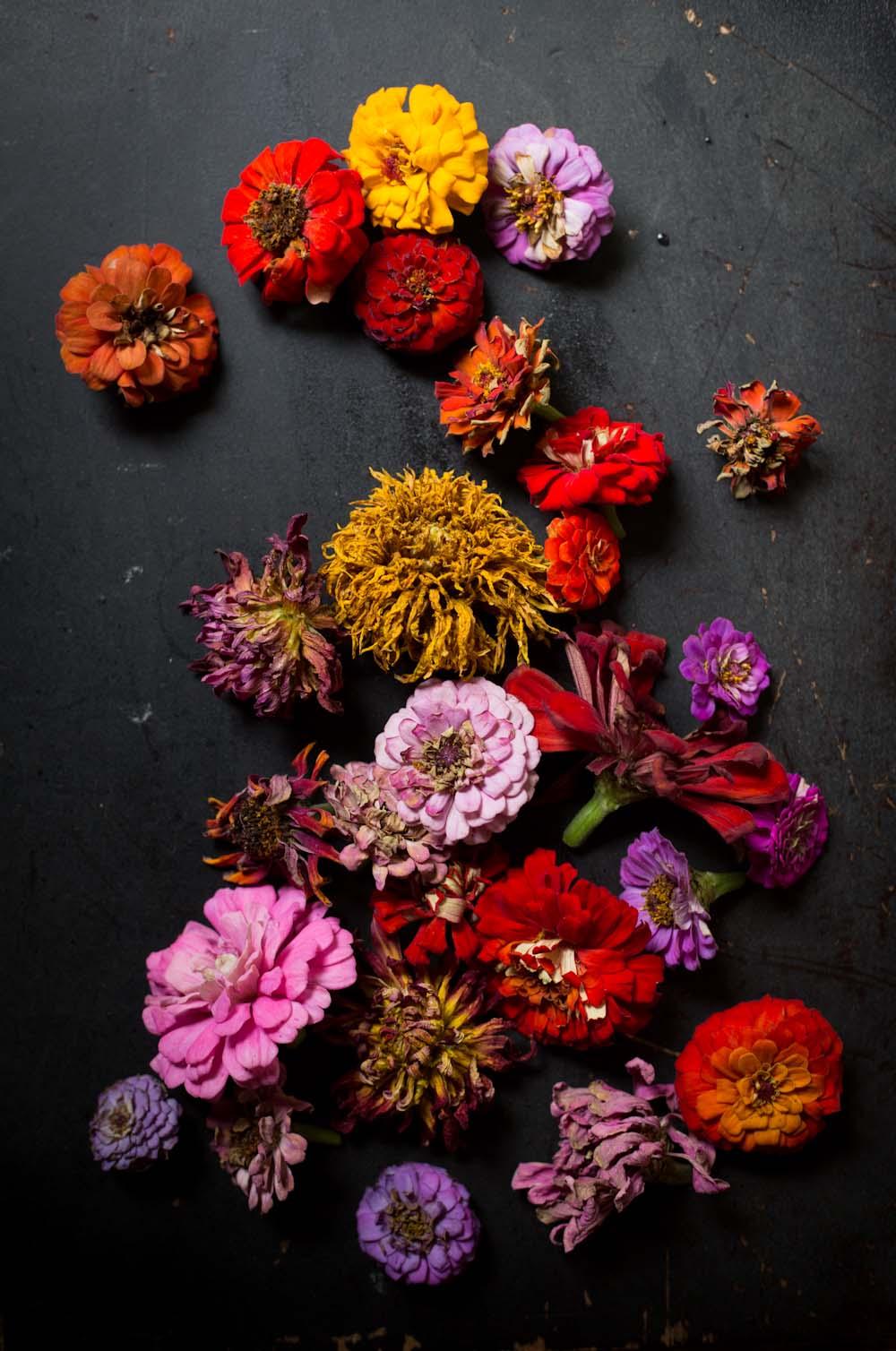 zinnia flowerheads-0422.jpg