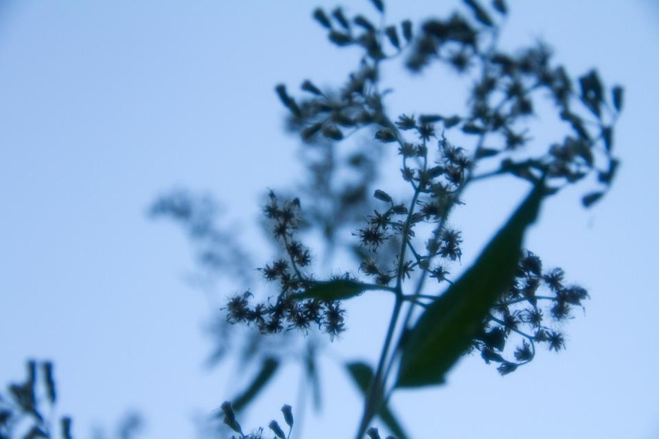 KB_blooms-sky-5591.jpg