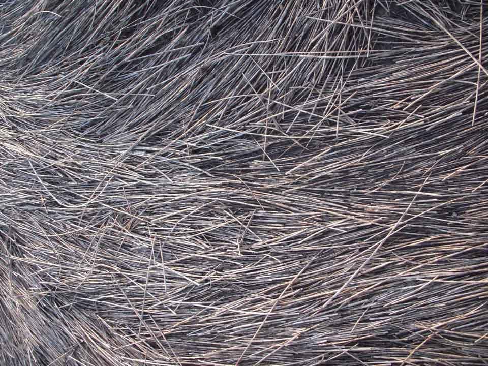 RW_seagrass-8131.JPG