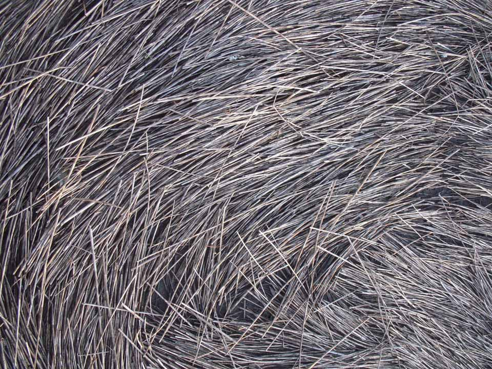 RW_seagrass-8125.JPG