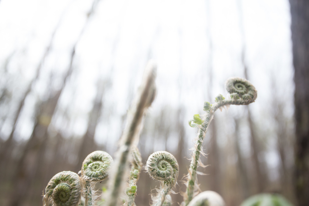 woodland spring-7113.jpg