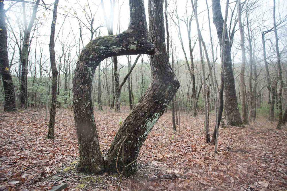 woodland spring-7054.jpg