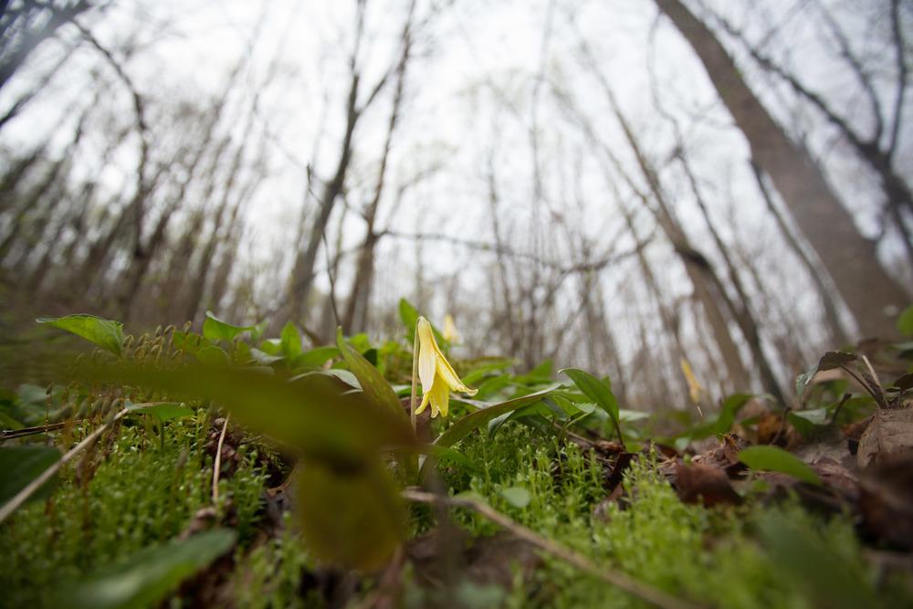 woodland spring-7105.jpg