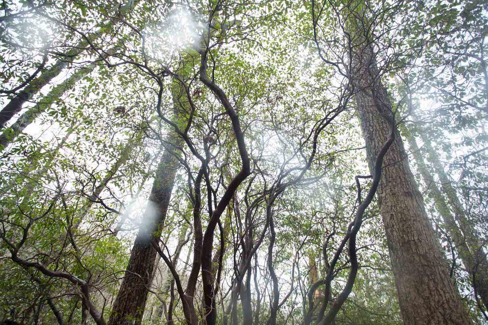woodland spring-7059.jpg