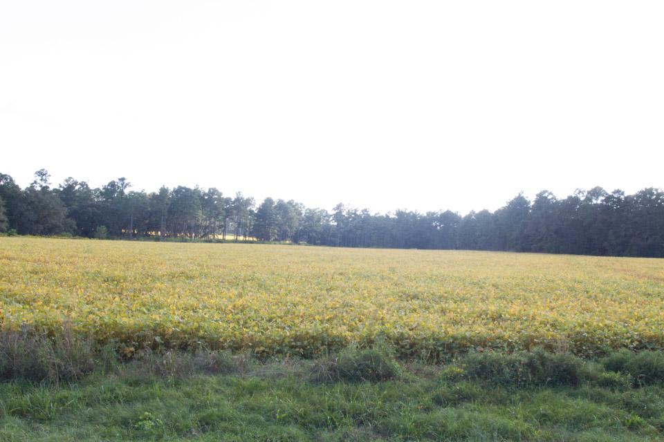 KB_soybeans-1056.jpg
