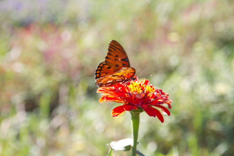 KB_3porchfarm-butterflies-4238.jpg