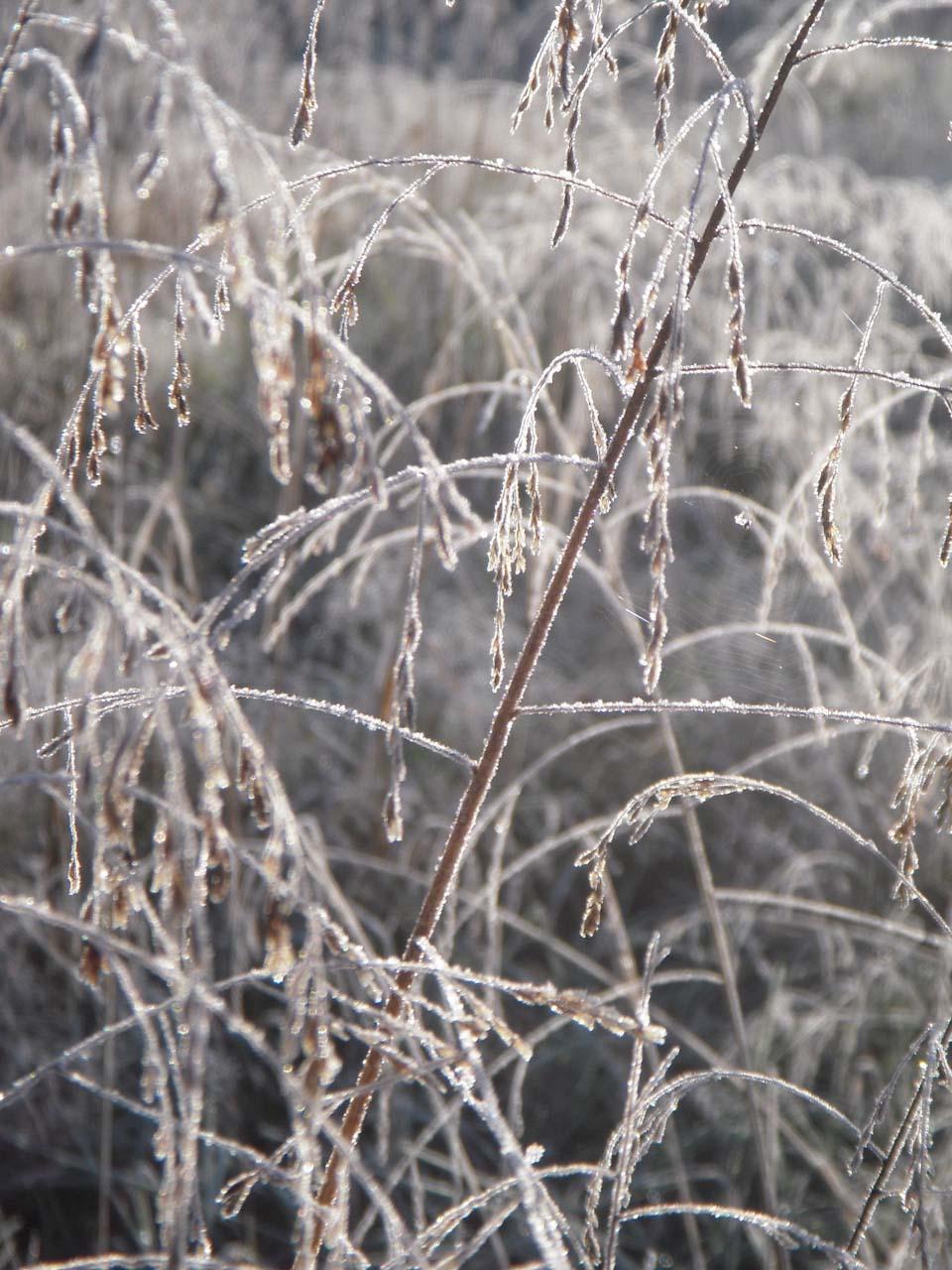 RW_winterlights-0526.jpg