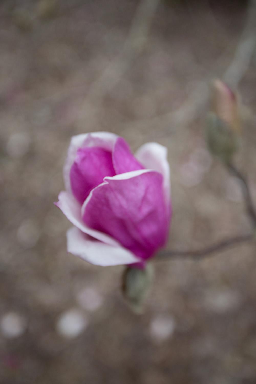 first day of spring-0576.jpg