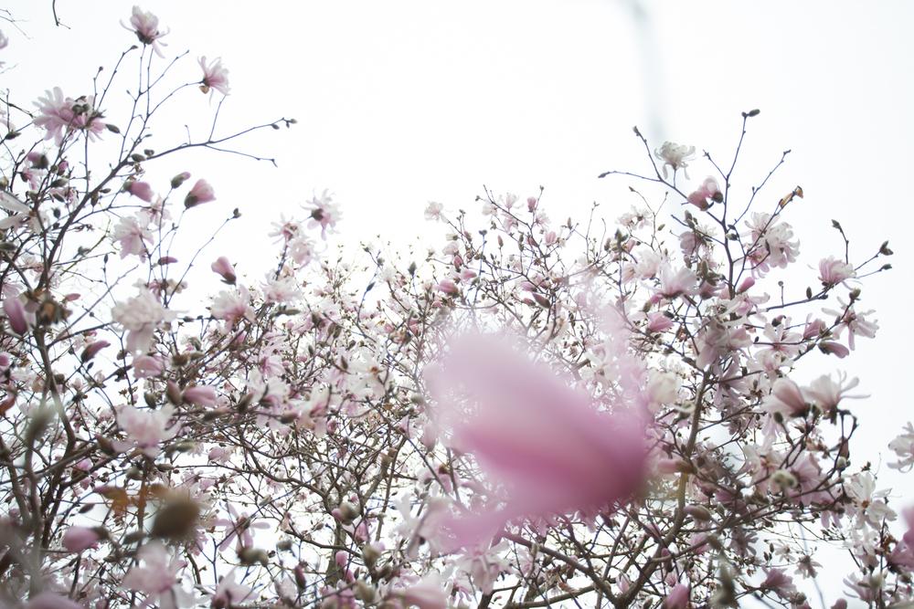 first day of spring-0510.jpg