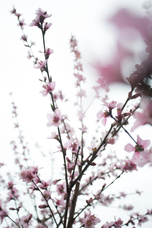 first day of spring-1100.jpg