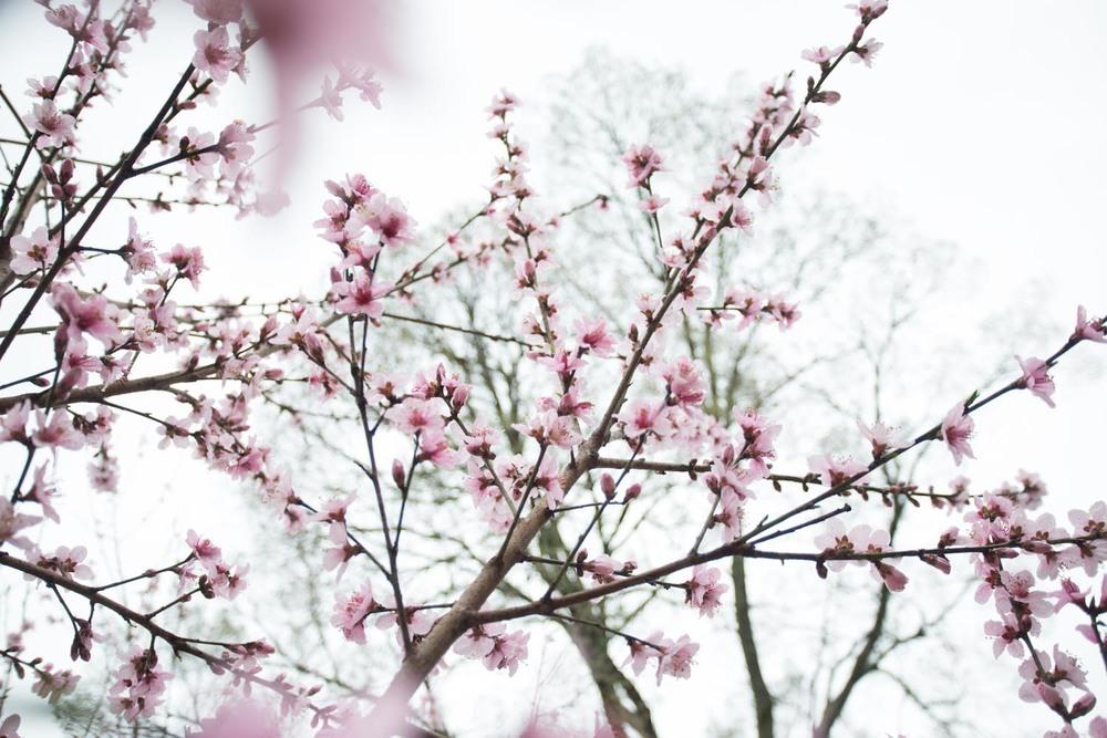 first day of spring-3.jpg
