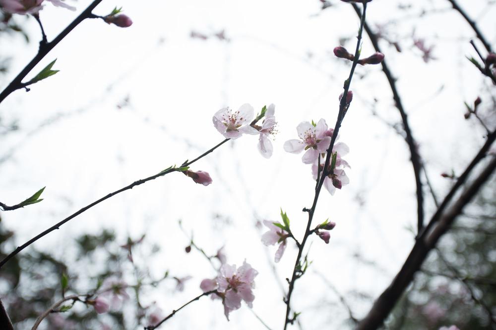 first day of spring-2.jpg