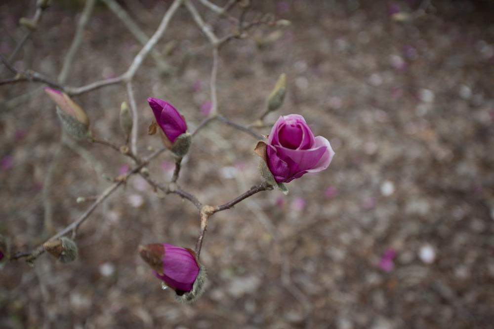 first day of spring-0571.jpg