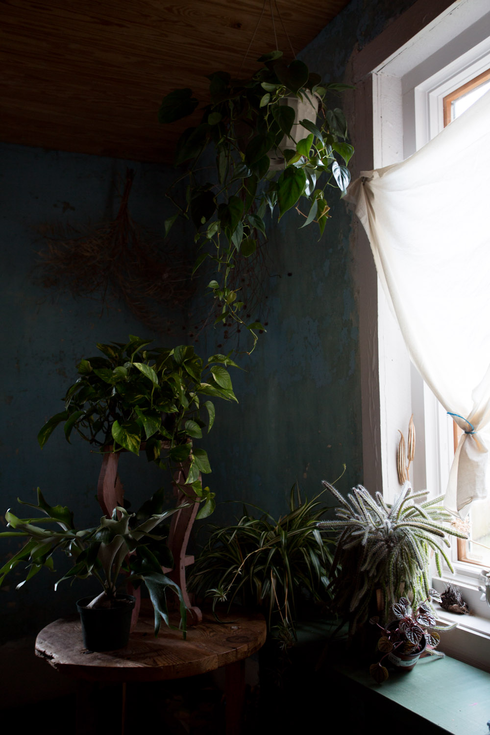 indoor_plants-6062.jpg