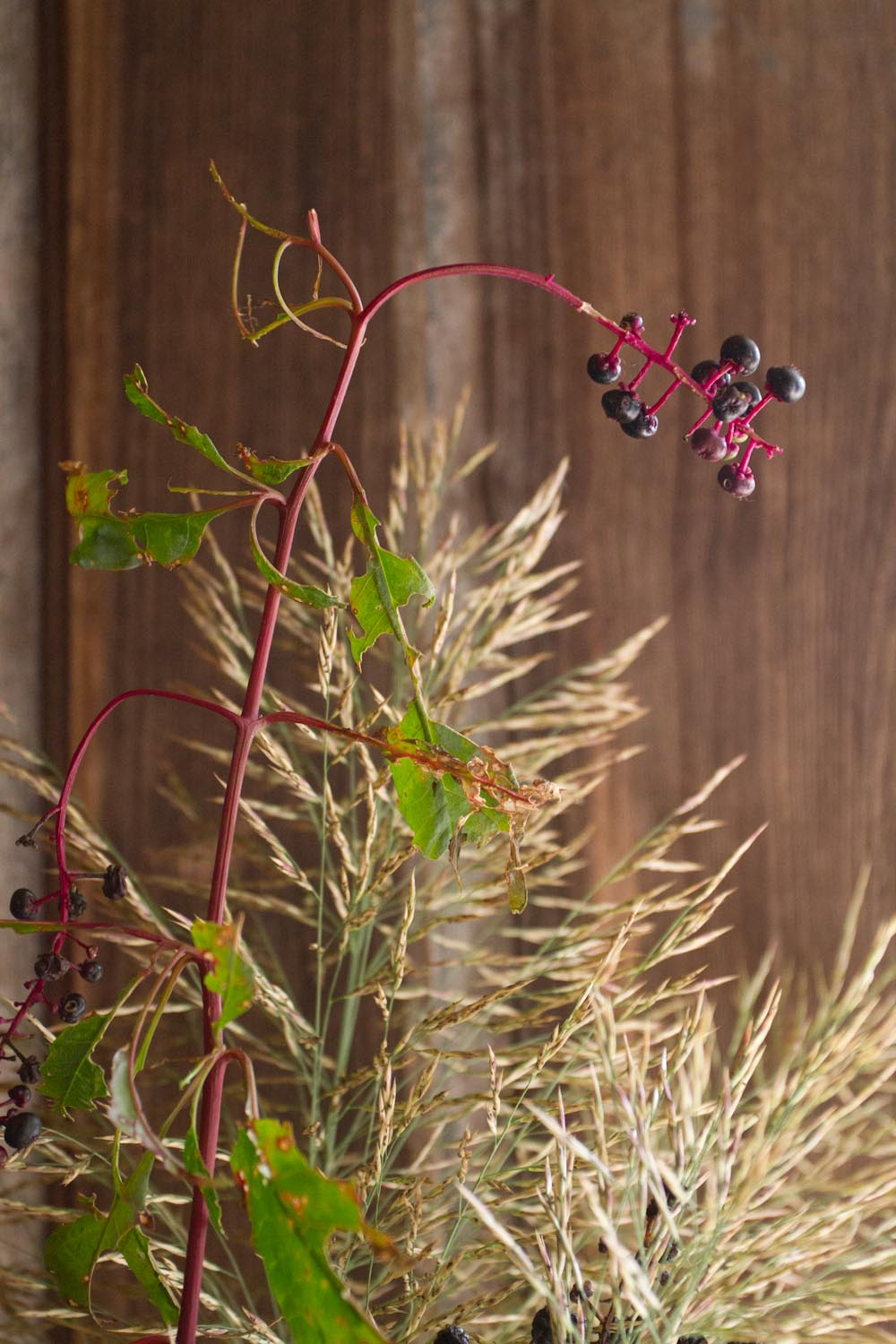seasonal_bloom_fall fruits and grasses-4468.jpg