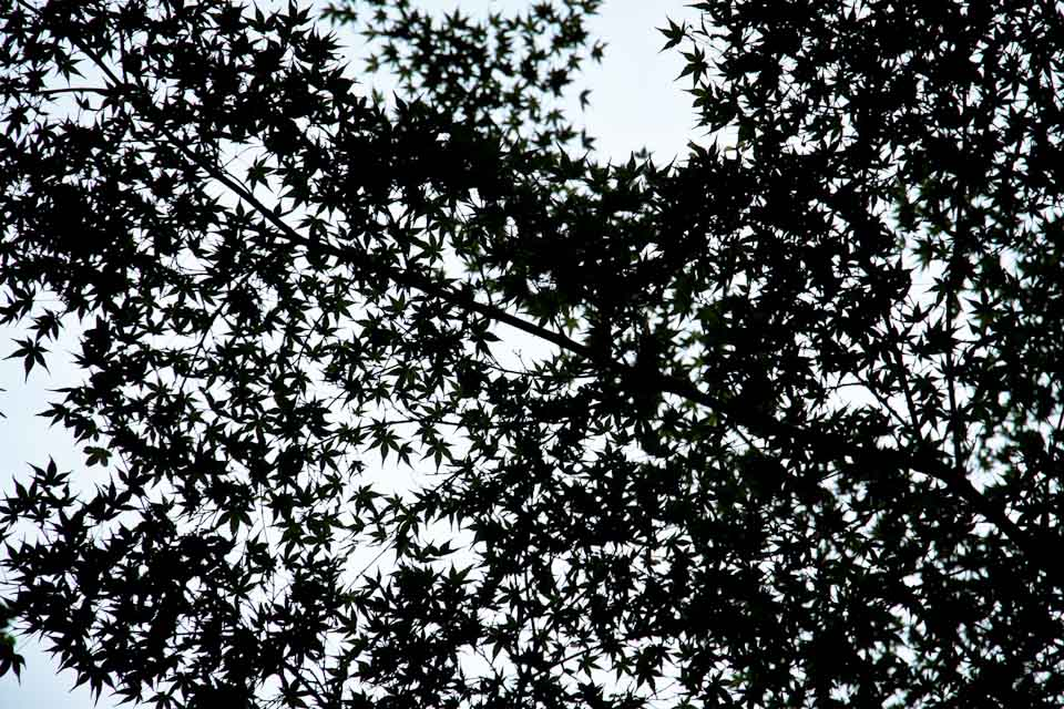 KB_leavessilhouette-3659.jpg