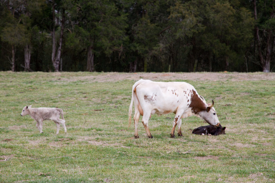 KB_newcalves-9157.jpg
