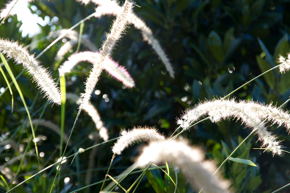 KB_grasses-4298.jpg