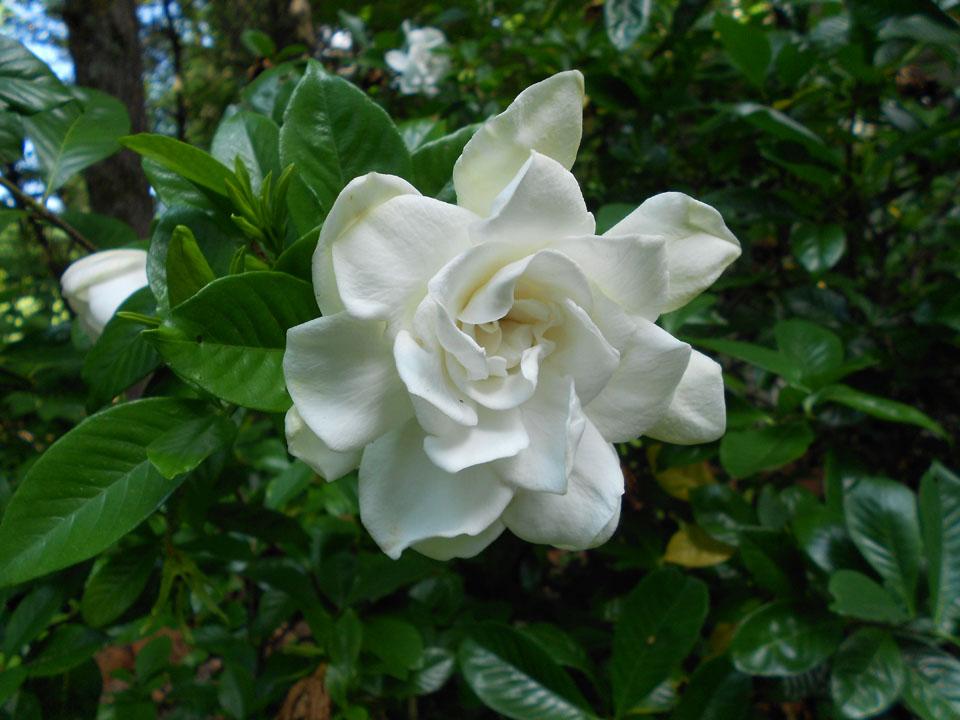 RW_bloominandsprouting-3938.JPG