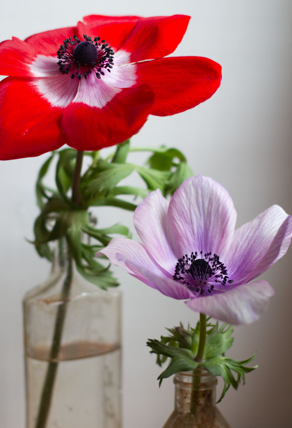 anemones from mandy.jpg