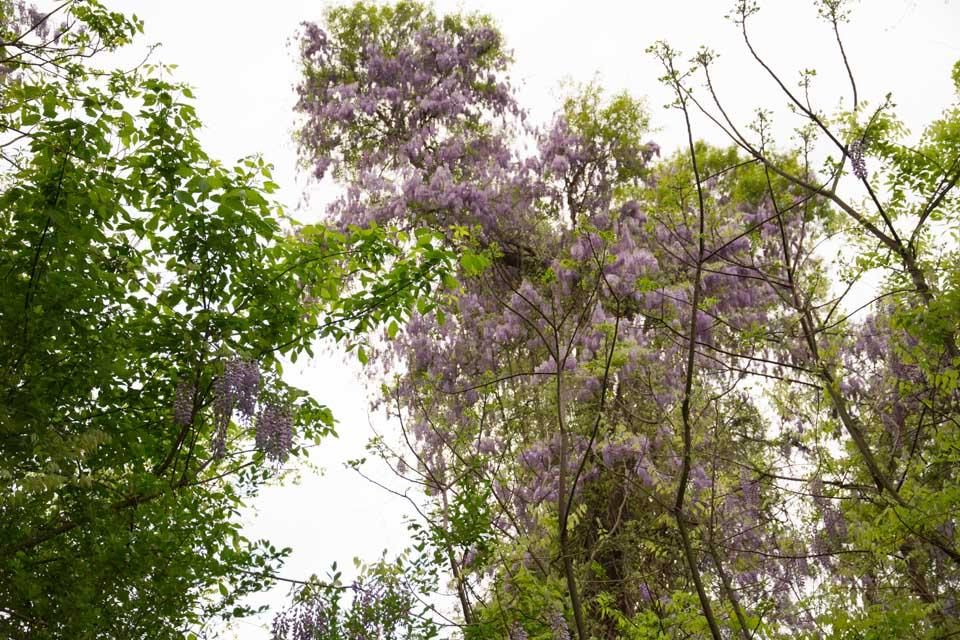 KB_wisteria-6891.jpg