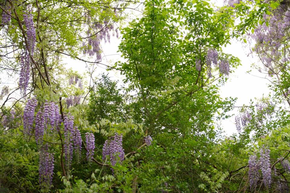 KB_wisteria-6890.jpg