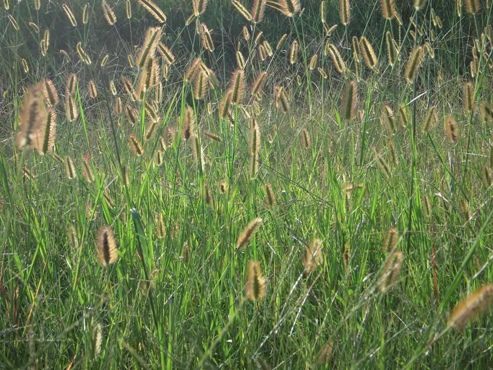 RW_tallgrass-8676.jpg