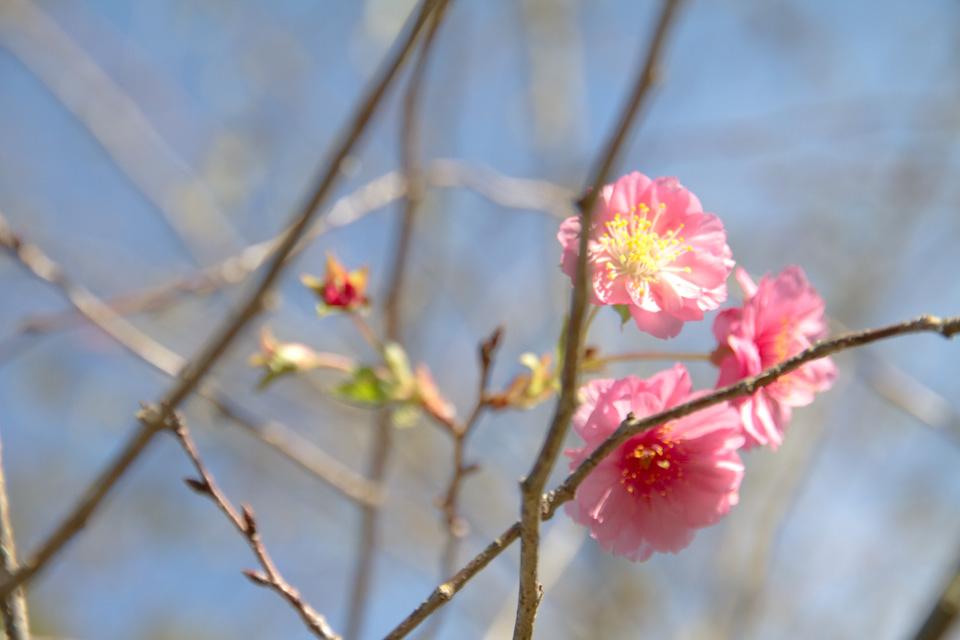 KB_pinkblooms-4273.jpg