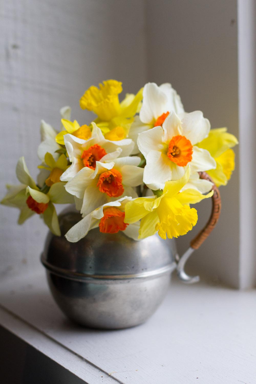 first_daffodils-0152.jpg