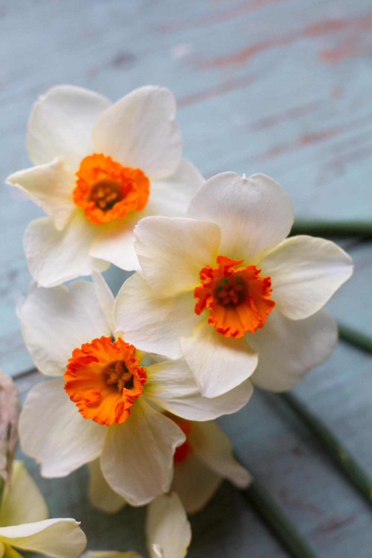 first_daffodils-0148.jpg
