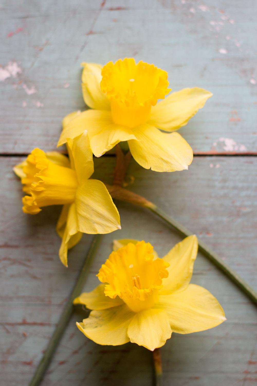 first_daffodils-0144.jpg