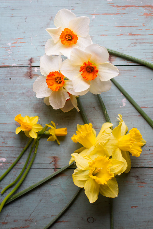 first_daffodils-0141.jpg