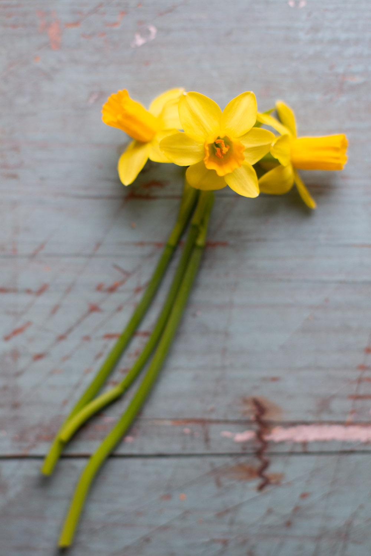 first_daffodils-0143.jpg
