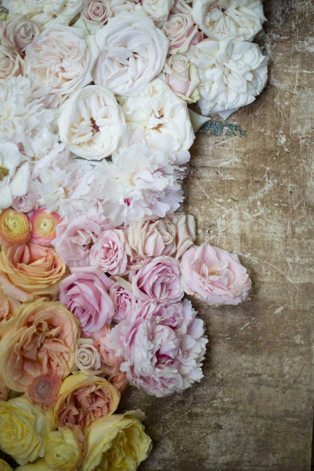 ombre_roses-9261.jpg