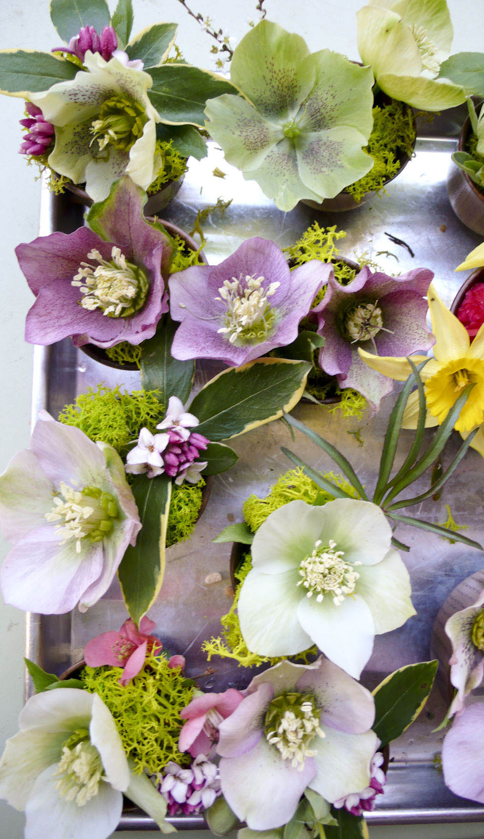 hellebores_daffodils_quince-1000223.jpg