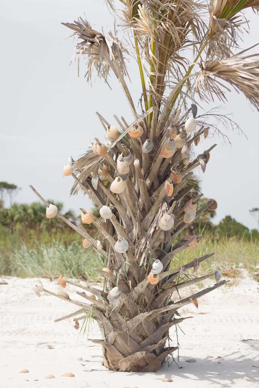 shell_tree-2970.jpg