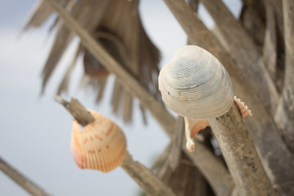 shell_tree-2972.jpg
