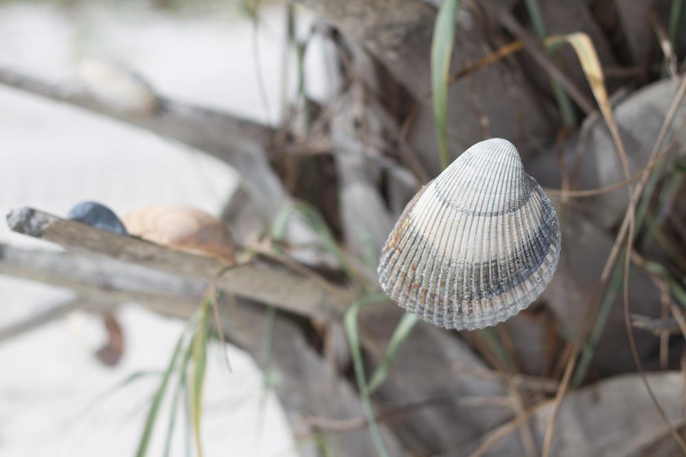 shell_tree-2973.jpg