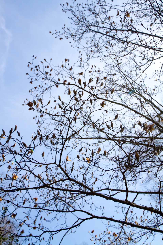 KB_magnolialove-18-2.jpg